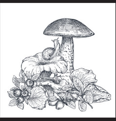 composition hand drawn forest mushrooms vector image