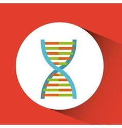 dna molecule design vector image