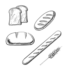 Toasts long loaves baguette and wheat ear vector