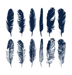 hand drawn feathers set on white background vector image vector image