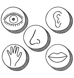 five senses icons vector image