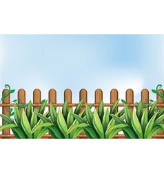 A yard with plants vector