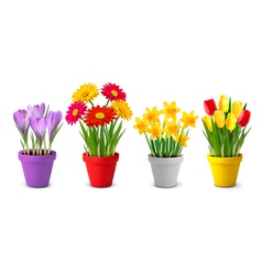 Collection spring and summer colorful flowers vector