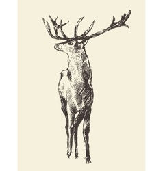 Deer Engraving Vintage vector