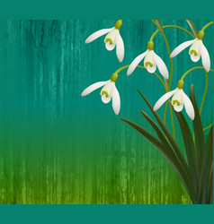 floral background spring flowers snowdrops vector image