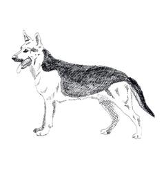 German Shepherd hand drawn isolated on vector