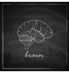 Vintage of human brain on blackboard background vector