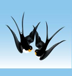 kiss swallows vector image