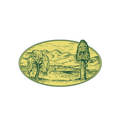 willow and sequoia tree lake mountains oval vector image