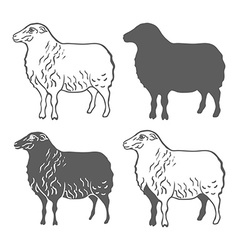 Domestic Animal Sheep Design Elements vector image vector image