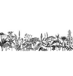 hand drawn medicinal herbs banner design flowers vector image