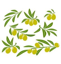 olive branches set with green olives on white vector image