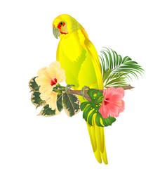Parrot in yellow bird indian ringneck vector
