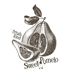 pomelo logo design template fresh fruit vector image