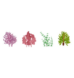 seaweed underwater flora collection natural vector image
