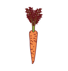 white background of carrot with stem and leaves vector image