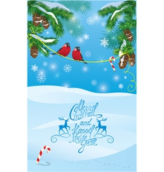 Card with fir tree branches and bullfinch birds vector image vector image
