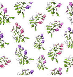 Seamless pattern with sweet pea vector