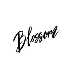 blossom spring concept lettering vector image