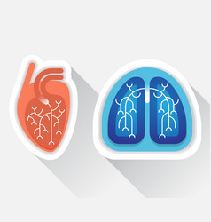 human lungs and heart flat vector image