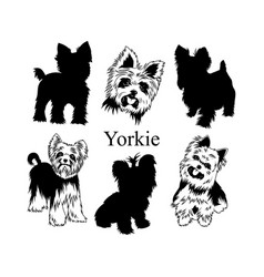 set yorkies collection pedigree dogs black vector image