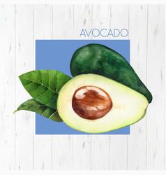 Watercolor avocado vector