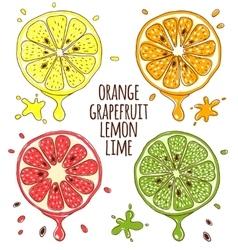 Fresh fruits slices Lemon and lime orange vector image