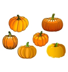 Orange pumpkin vegetables in cartoon style vector