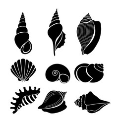 Set of sea shells black vector