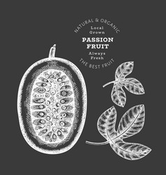 hand drawn sketch style passion fruit organic vector image