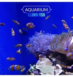 aquarium blue background with fish Clown vector image