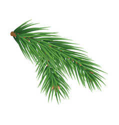 Green lush spruce branch isolated vector
