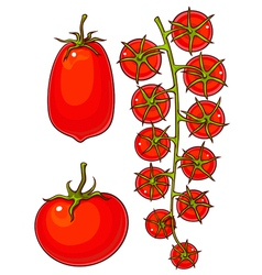 Tomatoes and cherry vector