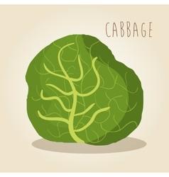 Fresh cabbage vegetarian food vector