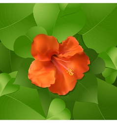 Orange hibiscus flower surrounded by lush green le vector