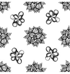Seamless pattern with black and white succulent vector