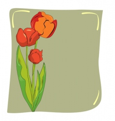 tulips card vector image vector image