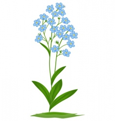Blue forget-me-nots vector