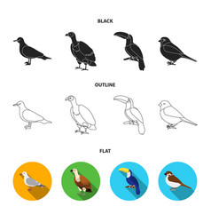 gull toucan and other species birds set vector image