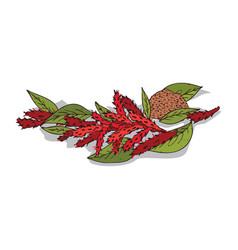 Isolated clipart amaranth vector