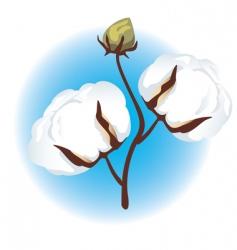cotton branch vector image