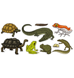 crocodile and turtle reptiles and amphibians set vector image