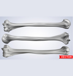 detailed graphic photorealistic human bones set vector image