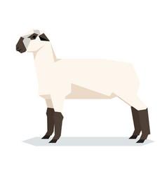Flat geometric hampshire sheep vector
