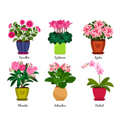 houseplant flowers in pots vector image