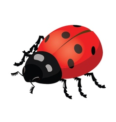 Insect ladybug vector