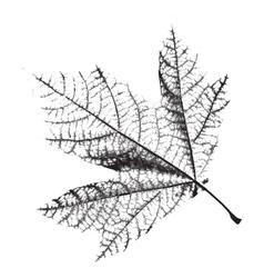 Distress Leaf Texture vector image