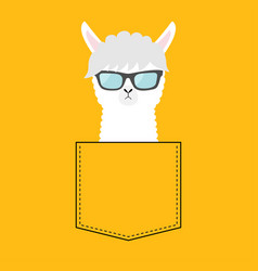 alpaca llama face head in pocket sun glasses vector image