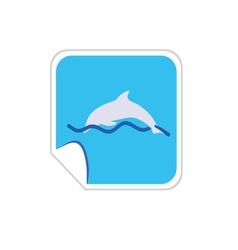 Dolphin color vector