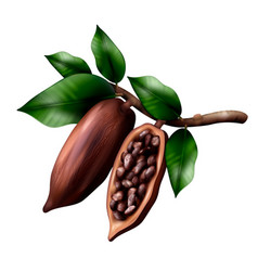 realistic cocoa tree composition vector image